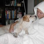 Собака-любвеобильняка